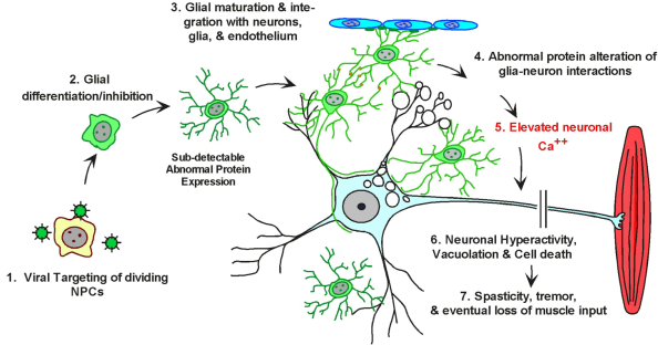 Glial Dysfunction Hypothesis of RV-Induced Neurodegeneration