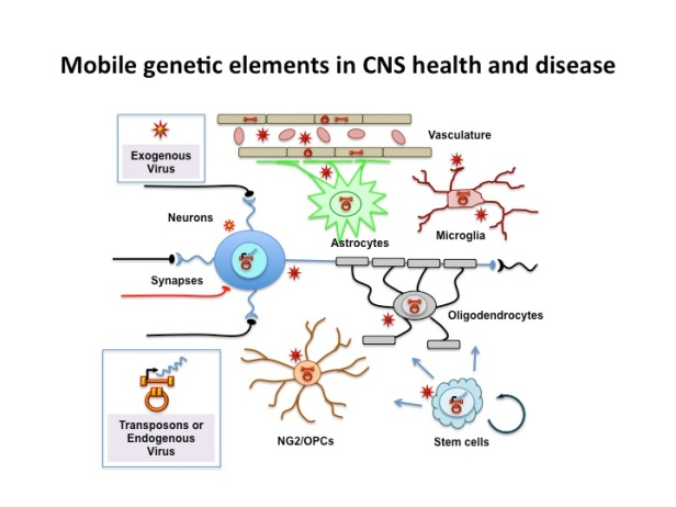 Mobile Genetic Elements in CNS Health and Disease